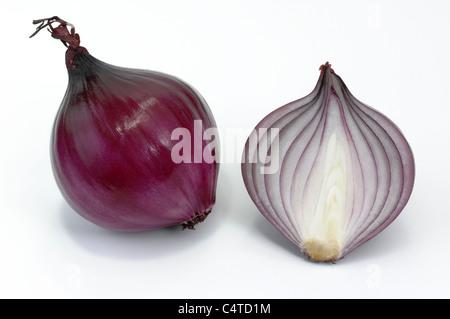Jardin oignon (Allium cepa). Oignon rouge, ensemble et de moitié. Studio photo sur un fond blanc. Banque D'Images