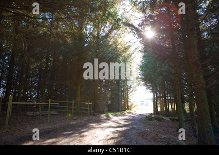 Une voie pour sortir de l'ombre sur la forêt à un champ lumineux de l'avant avec l'espoir d'une route plus léger Banque D'Images