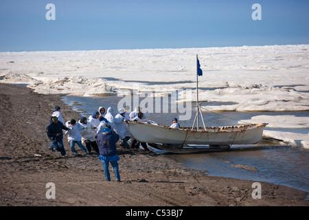L'équipage de l'umiaq pousse leur chasse au large de la glace de mer Chuchki à la fin de la saison de chasse du printemps à Barrow, Alaska arctique, l'été