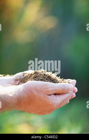 Close-up of a man's hand holding sol