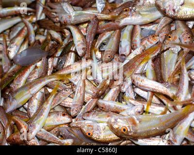 Sicile Italie Marché de poisson à poisson Bébé Porticello Banque D'Images