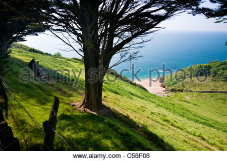 Au-dessus de Landcombe Cove, près de Dartmouth, South Hams, Devon, Angleterre. Banque D'Images