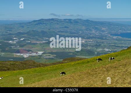 Depuis le sommet de Lagoa do Fogo, cratère à la recherche des vaches et à la partie ouest de São Miguel avec les Banque D'Images