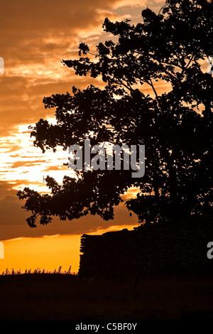 Close-up of cropped silhouette des arbres et mur de pierre contre ciel dramatique au coucher du soleil Banque D'Images