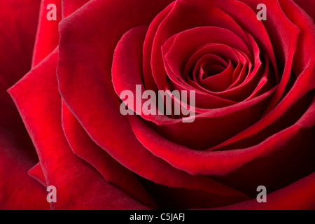 Fond rose rouge Banque D'Images
