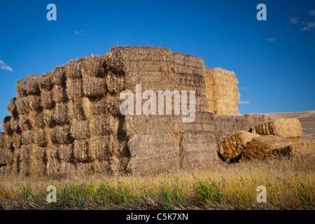 Bottes de foin près de la ville de Palouse dans la région agricole de la Palouse dans l'Est de l'état de Washington. Banque D'Images
