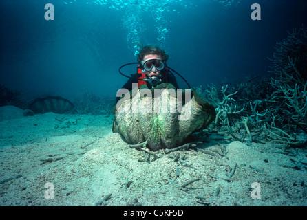 L'examen d'un plongeur à cannelures (palourdes géantes Tridacna squamosa) sur un récif de corail. Palau, Micronésie Banque D'Images