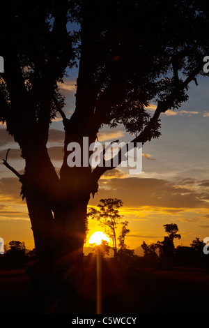 Silhouettes Sunrise arbres dans la savane de l'écosystème unique de KOH PHRA THONG, THAÏLANDE Banque D'Images