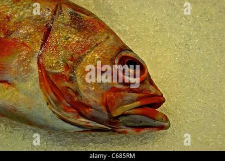 Sébaste à l'échelle pour la vente sur lit de la glace concassée dans fish shop Lonsdale Quay Market Banque D'Images