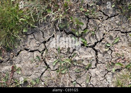 La terre craquelée séché à cause de la sécheresse Saskatoon Saskatchewan Canada Banque D'Images