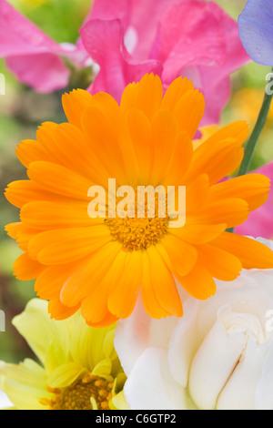 Calendula officinalis, Lathyrus odoratus, Dahlia, et Rosa.L'été des fleurs dans un vase. Banque D'Images