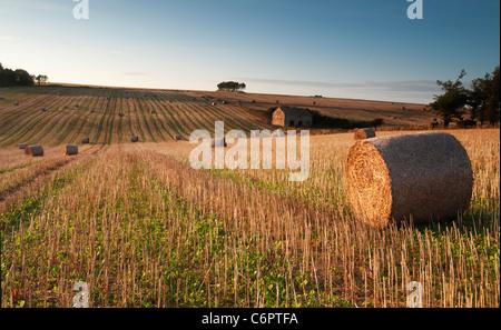 Bottes de foin et grange abandonnée au coucher du soleil dans le sud campagne du Devon Banque D'Images
