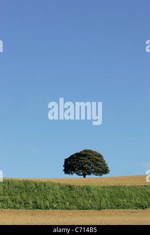 Un arbre solitaire dans un champ de blé contre un ciel bleu au début de l'automne
