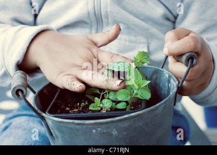 Enfant de toucher le sol de l'usine de menthe, mid section Banque D'Images