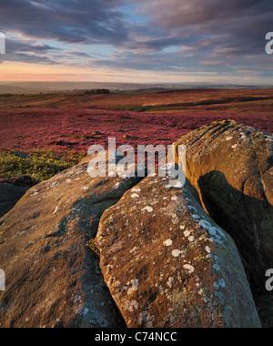 Tôt le matin, la lumière sur la bruyère aux couleurs vives de la haute crête de rocher et couvert falaise dominant Banque D'Images