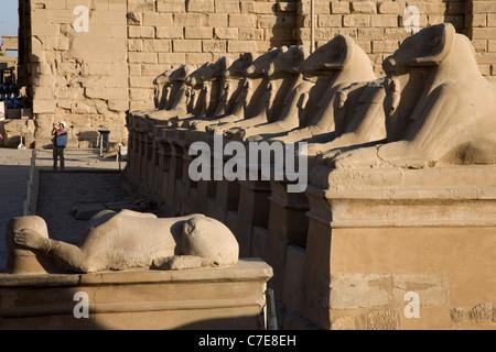 Avenue de sphinx tête de ram dans le Temple de Karnak, Louxor Banque D'Images