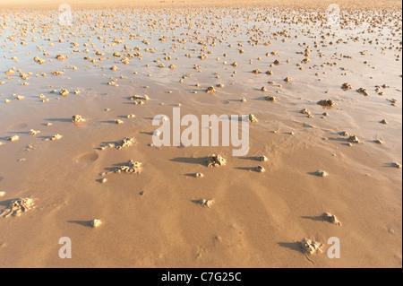 Lugworm cast Arenicola marina sur l'ergot de la plage de sable de ver