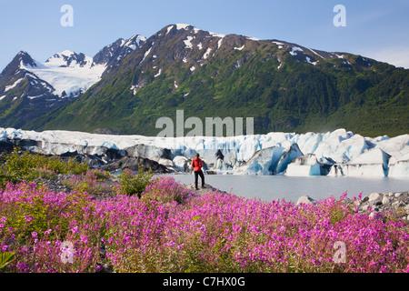 Un randonneur bénéficie d les fleurs sauvages le long du lac en face de Spencer Glacier, Alaska, la Forêt Nationale Banque D'Images
