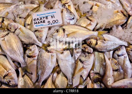 Poisson frais (Sparus aurata) à vendre sur le marché local en Bologne, Italie Banque D'Images