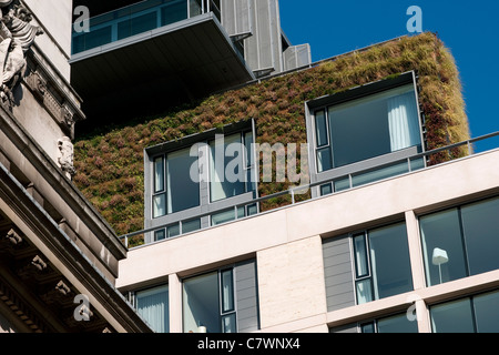 Green Living wall sur bloc d'appartement, Londres, Angleterre Banque D'Images