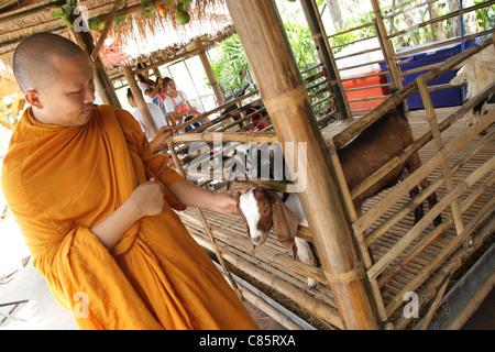 Moine thaï jouant avec les jeunes , chèvre , Thaïlande Ayutthaya