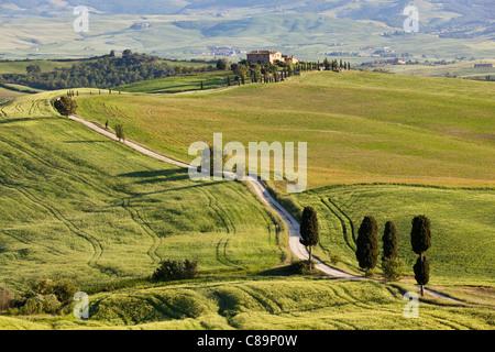 Italie, Toscane, Val d'Orcia, vue sur paysage vallonné et ferme avec des cyprès Banque D'Images