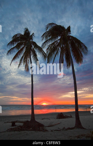 Coucher de soleil et de palmiers sur la plage Playa Guiones, Nosara, Péninsule de Nicoya, Province de Guanacaste, Banque D'Images