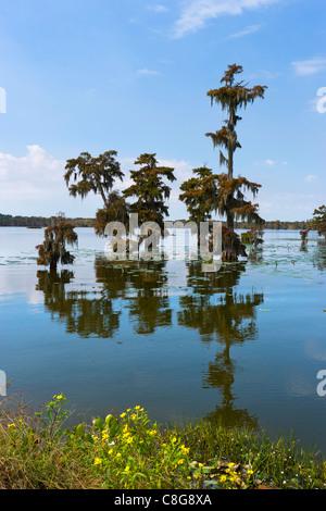 Lac Martin dans la Louisiane bayoux près de Breaux Bridge, pays Cajun, Louisiane, Etats-Unis Banque D'Images