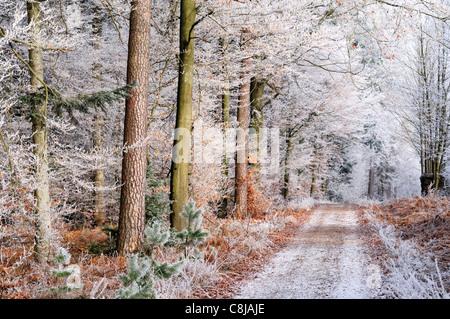 L'Allemagne, l'Odenwald: de givre et de glace à la forêt de Hirschberg Limbach Baden Banque D'Images
