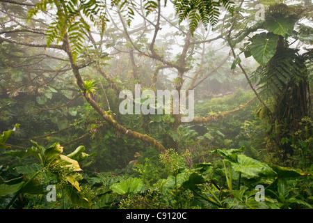 Pays-bas, La Serena, l'île de Saba, Antilles néerlandaises. Le mont Scenery Parc National. Point culminant des Pays Banque D'Images