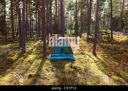 Tente de camping en forêt Banque D'Images
