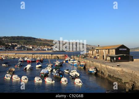 Lyme Regis est un port historique sur la côte de Dorset. Le Cobb est un monument national construit un long mur Banque D'Images