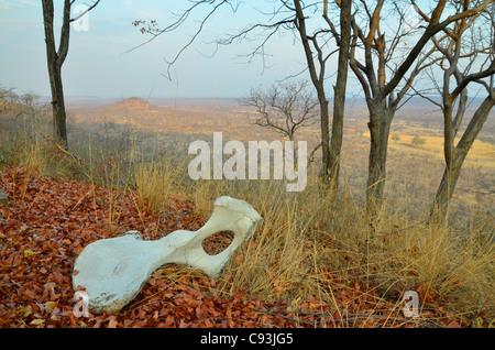Le Zimbabwe est un petit pays doté d'une incroyable variété de paysages et d'animaux. Banque D'Images