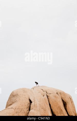 Rock Climber sur haut de Boulder Banque D'Images