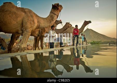 Les commerçants de chameau recueillir l'eau pour leur bétail à l'occasion de la plus grande foire annuelle du bétail Banque D'Images