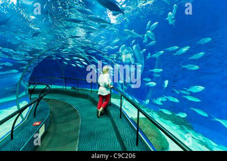 Woman à Shanghai ocean Aquarium, République populaire de Chine, République populaire de Chine, l'Asie Banque D'Images