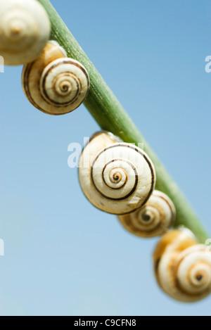 Escargots sur branch