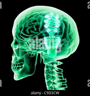 Cerveau avec ampoule verte II, signature numérique image générée par Hank Grebe Banque D'Images