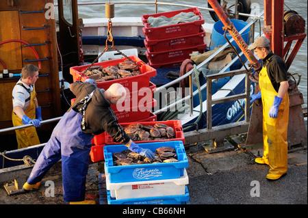 Mer du Nord pêcheurs déchargent de captures de crabes de bateau de pêche, à l'East Yorkshire fish quay port de Bridlington Banque D'Images