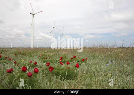 Ferme éolienne éoliennes dans le cap Kaliakra avec la floraison des plantes rares (Paeonia tenuifolia, Adonis vernalis) Banque D'Images