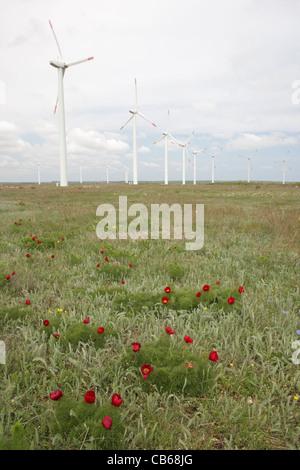 Ferme éolienne éoliennes dans le cap Kaliakra avec la floraison des plantes rares (Paeonia tenuifolia, Bulgarie Banque D'Images