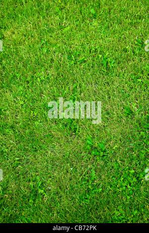 herbe verte Banque D'Images