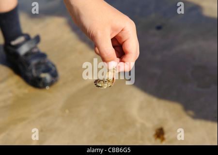 Stock photo d'un garçon tenant un ermite Banque D'Images