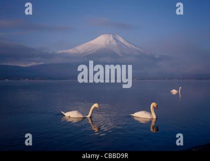 Le Mont Fuji et trois cygnes sur le lac Yamanaka, Yamanakako, Yamanashi, Japon Banque D'Images