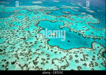 Vues aériennes de beau coeur de corail dans la spectaculaire Grande Barrière de Corail près de îles Whitsunday dans Banque D'Images