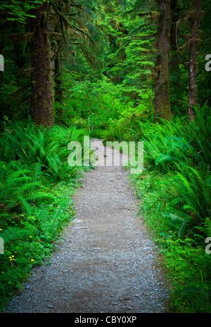 Sentier de la rivière Hoh Hoh en forêt tropicale du Parc National Olympique Banque D'Images