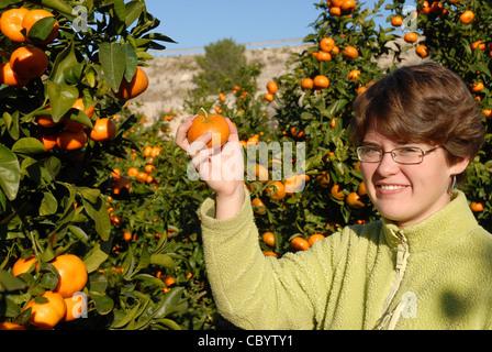 Teenage girl picking oranges mûres d'un arbre, Pedreguer, Province d'Alicante, Communauté autonome de Valence, Espagne Banque D'Images