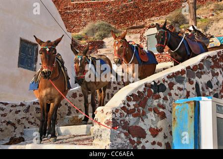 Les chevaux, les ânes et les mules sont encore utilisés aujourd'hui pour transporter les visiteurs d'Ammoudi (sur Banque D'Images