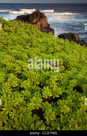Océan Pacifique à Ohe'o Gulch - aka sept piscines sacré, Haleakala National Park, près de Hana, Maui, Hawaii. Banque D'Images