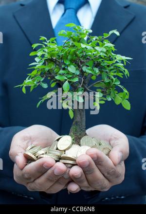 Portrait d'un petit arbre d'argent Banque D'Images